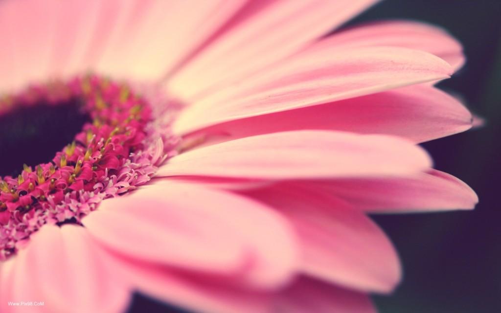 NHS Flower Sale May 11