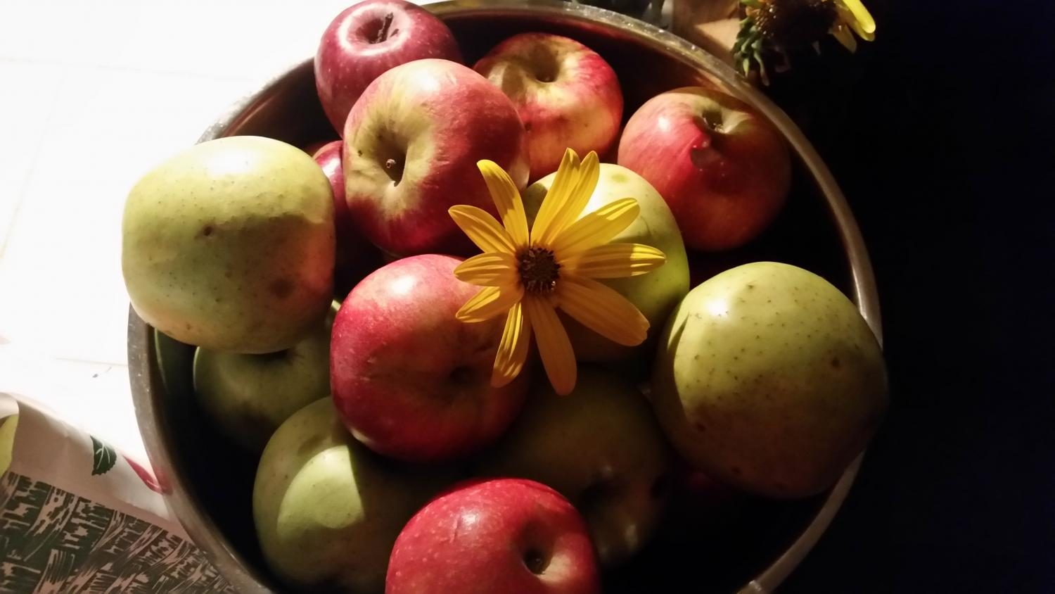 A Bushel and a Peck: Local Apple Picking Hotspots