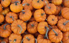 Pumpkin Spice Galore